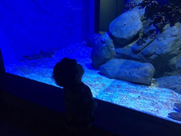 aquario-marinho-do-rio-2