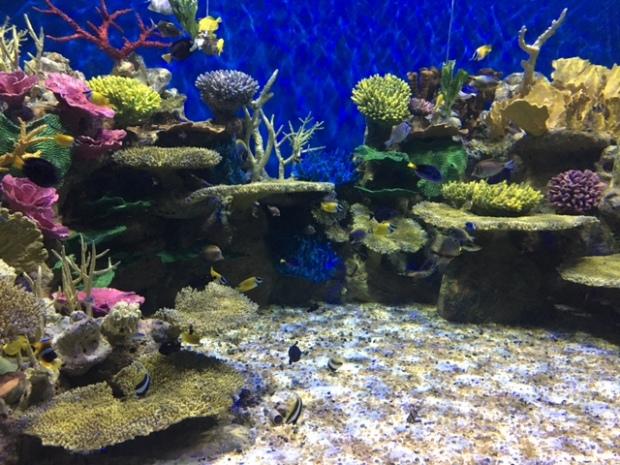 aquario-marinho-do-rio-3