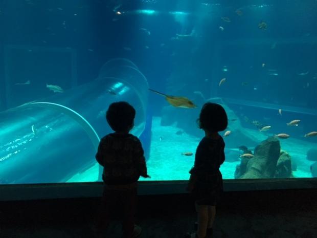 aquario-marinho-do-rio-4