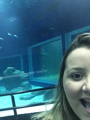 aquario-marinho-do-rio-6